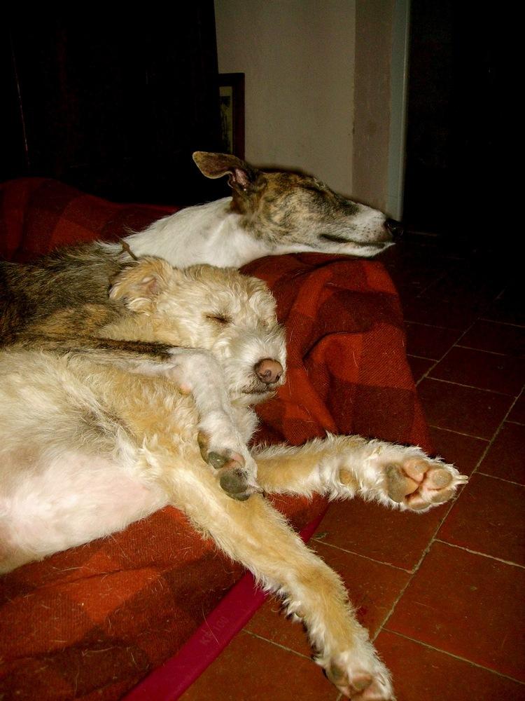 Posture originale pour dormir....et chez vous c'est comment??? - Page 4 Zltend10