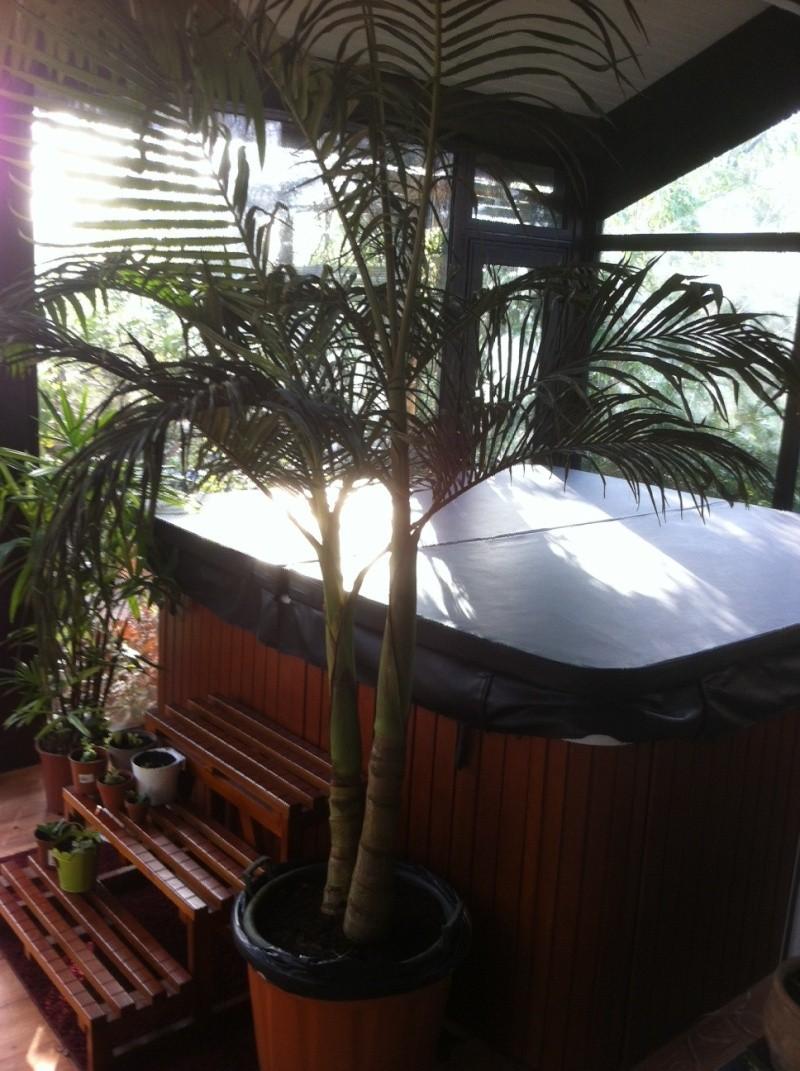 Palmier avec les feuilles qui sèchent Photo12