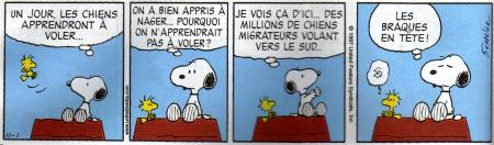 Un jeune étalon aux crets de charmont : Badgio v.d. Martinskapelle - Page 6 Snoopy11