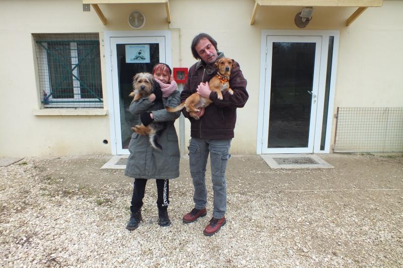 Poupi (ancienn. ARNOLD) x york et Jimmy (anc.WILLY) x teckel  2 ans de Spa de Thierville (55)- adoptés par Chiyou Dscf1214