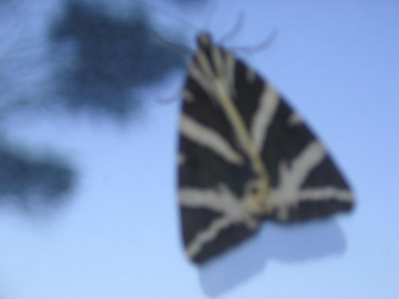 Pour Tom, notre entomologiste préféré Img_2559