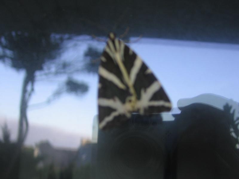 Pour Tom, notre entomologiste préféré Img_2560