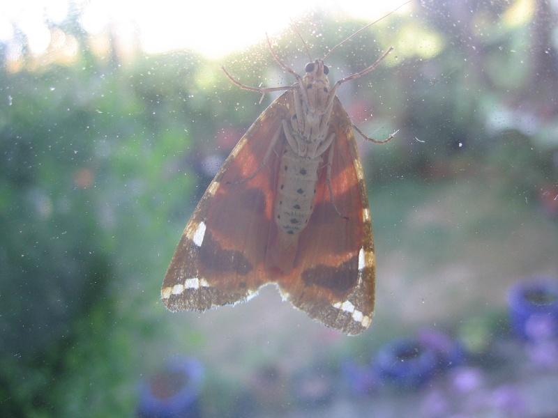 Pour Tom, notre entomologiste préféré Img_2561