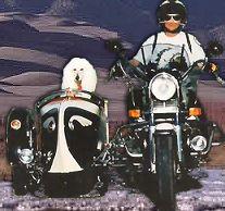 Un Road King Classic en hiver - Page 9 Fifigu10