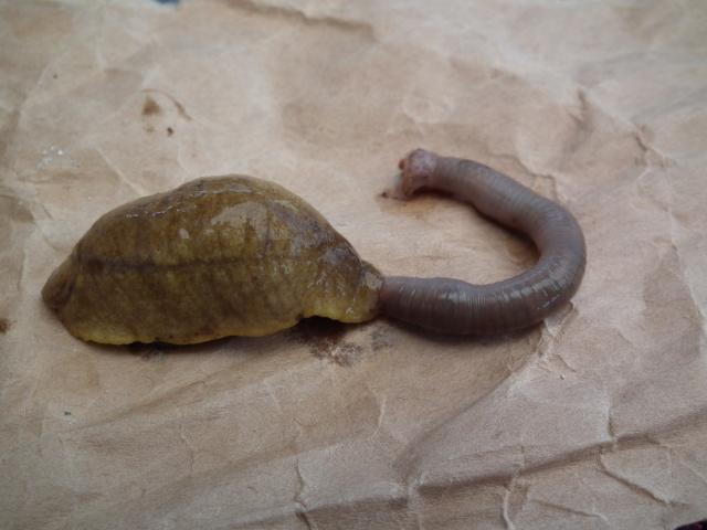 Les limaces Testce10