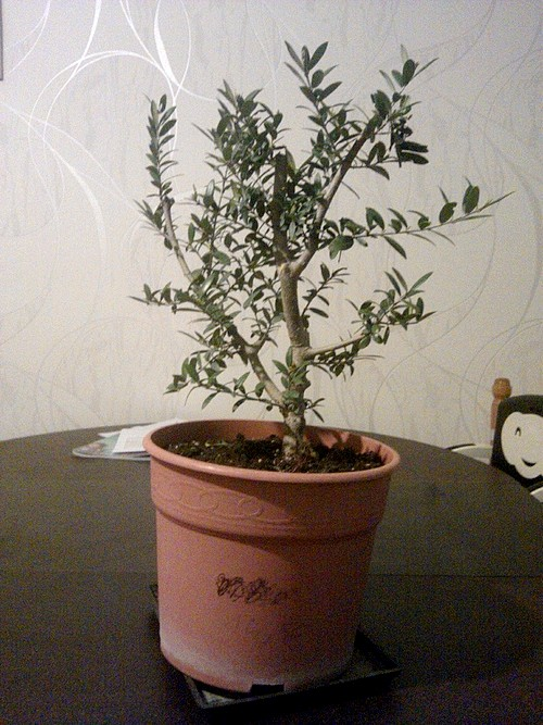 Premieres betises olivier... C360_210