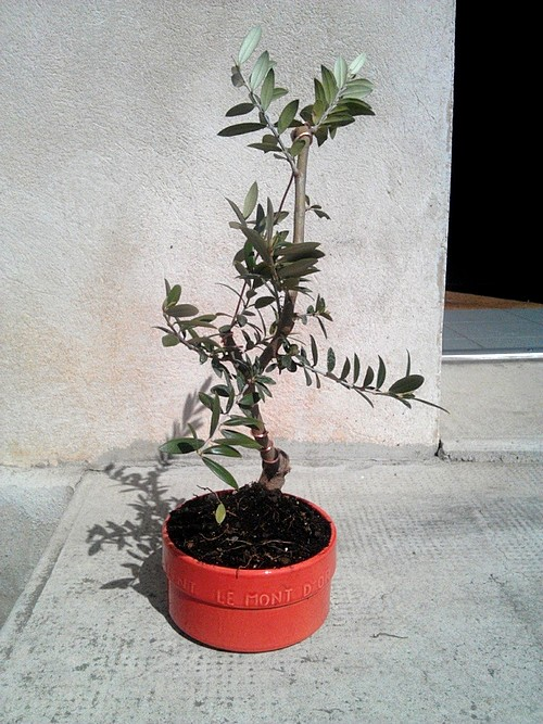Premieres betises olivier... C360_211