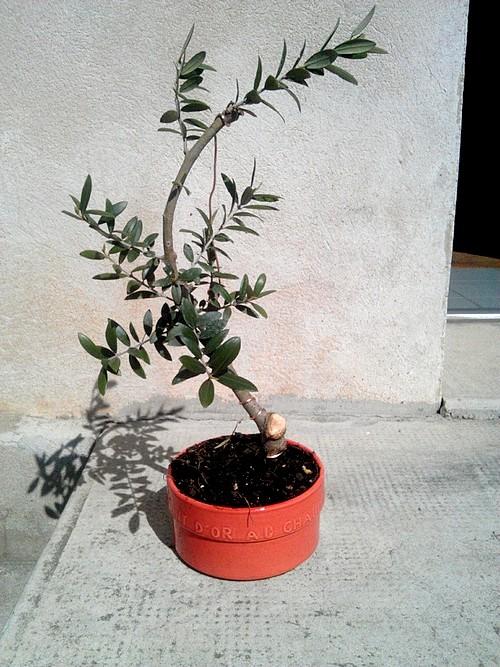 Premieres betises olivier... C360_212