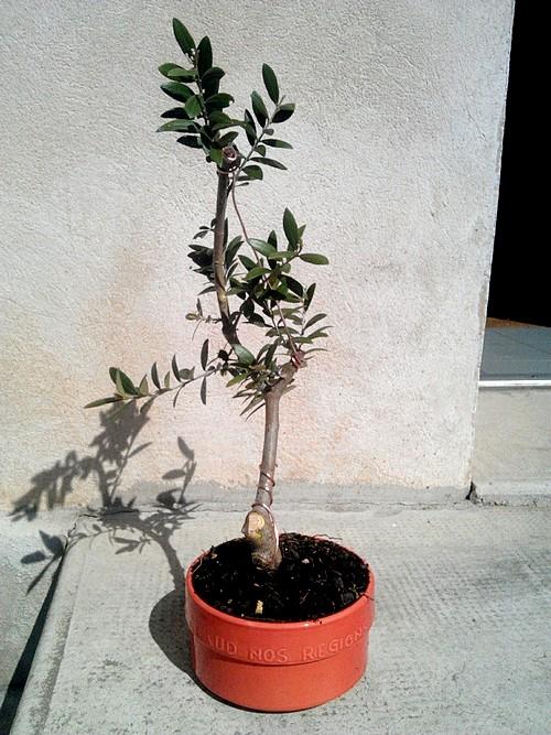 Premieres betises olivier... C360_213