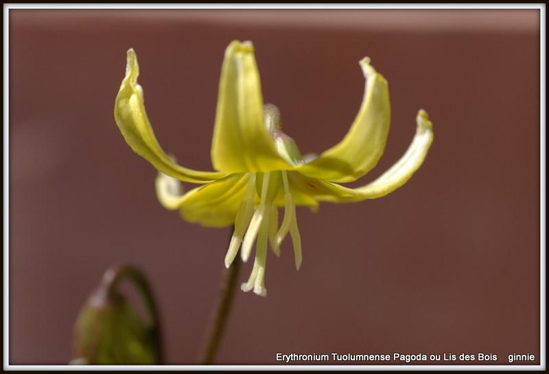 Plantation, culture et floraison des bulbes, des rhizomes, des griffes Imgp5650