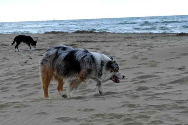 Rencontre plage espiguette