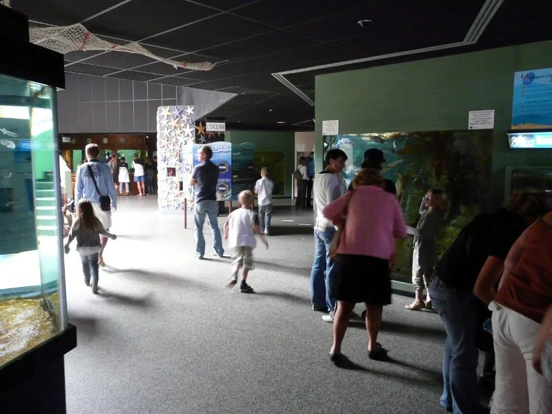 Aquarium de Le Croisic 2008-012