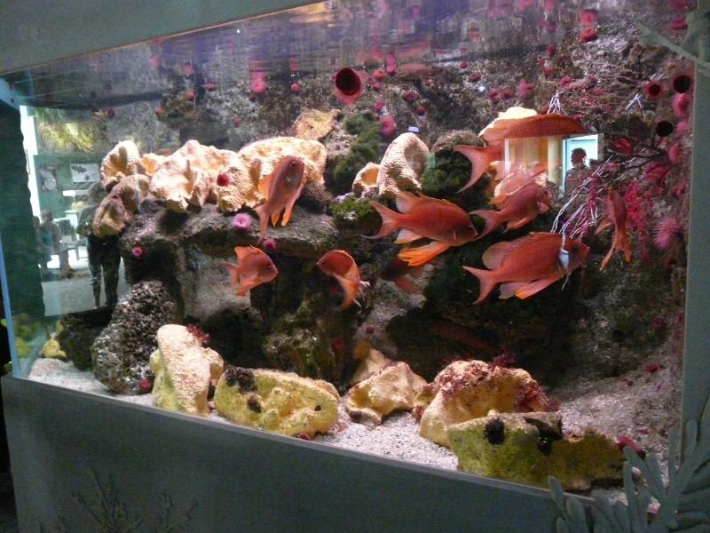 Aquarium de Le Croisic 2008-013