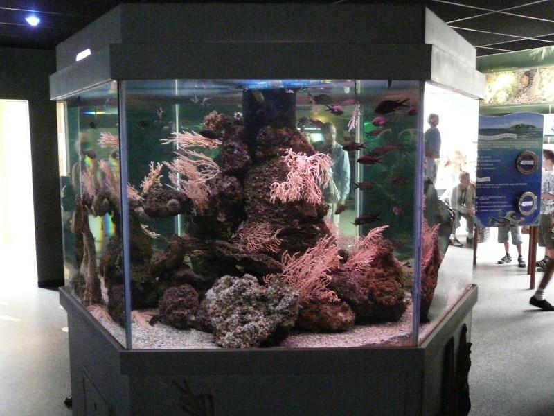 Aquarium de Le Croisic 2008-014
