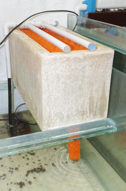 Reconditionnement d'un aquarium 2013-013