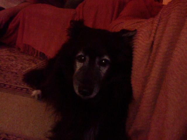 Aidez le chien léo à se soigner!vos conseils pour un cancer? vite plus que quelques jours! s.o.s Lao_3010