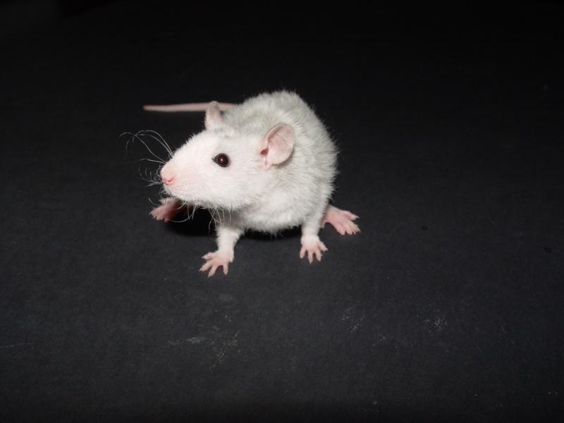 Sahri, petit ratounette... Dsc00110