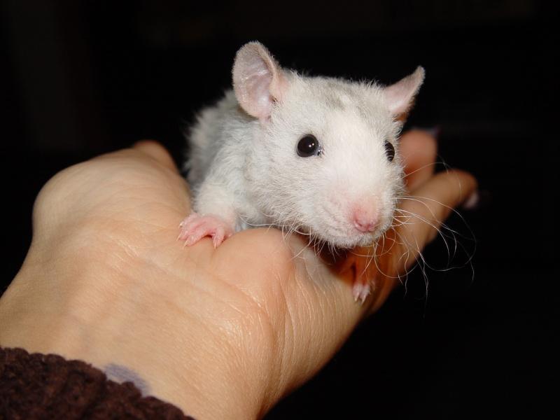Sahri, petit ratounette... Dsc00111
