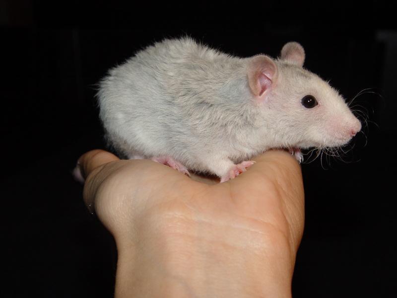 Sahri, petit ratounette... Dsc00112
