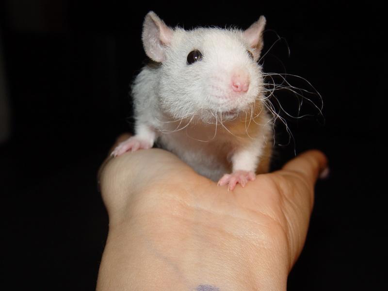 Sahri, petit ratounette... Dsc00114
