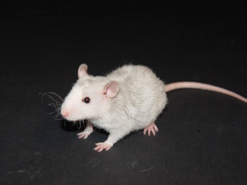 Sahri, petit ratounette... Dsc00115
