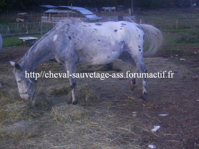 Quelques sites qui sauvent des chevaux... Appalo10