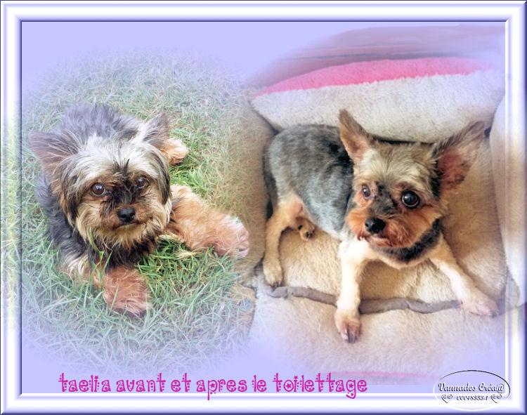 Le Toilettage de mes petits Amours  Taelia10
