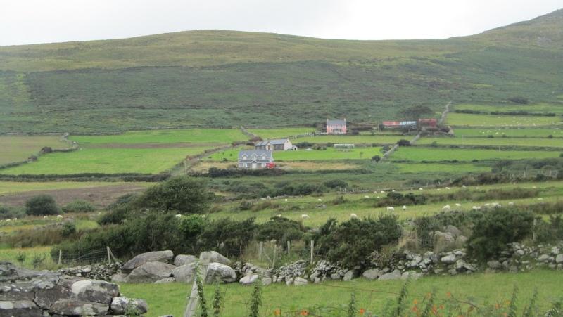 Irlande 2013 - Page 3 Dingle15