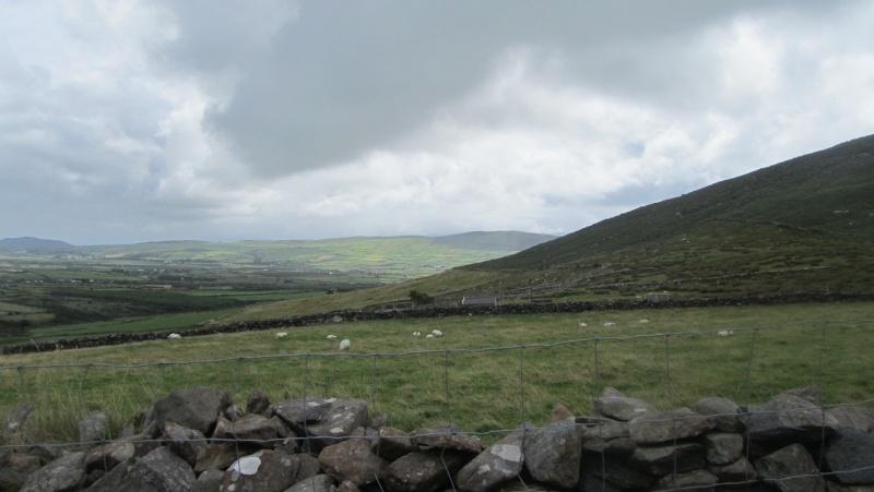Irlande 2013 - Page 3 Dingle16