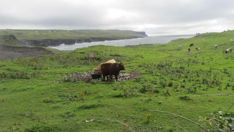 Irlande 2013 - Page 2 Doolin12