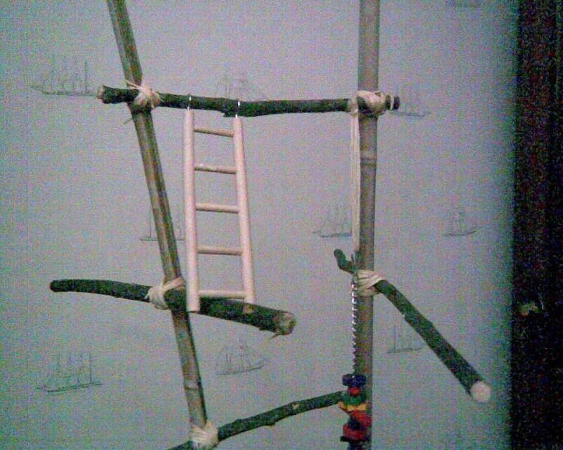 Un arbre à Perruches !!! Photo019