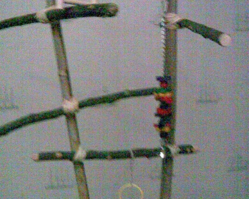 Un arbre à Perruches !!! Photo020