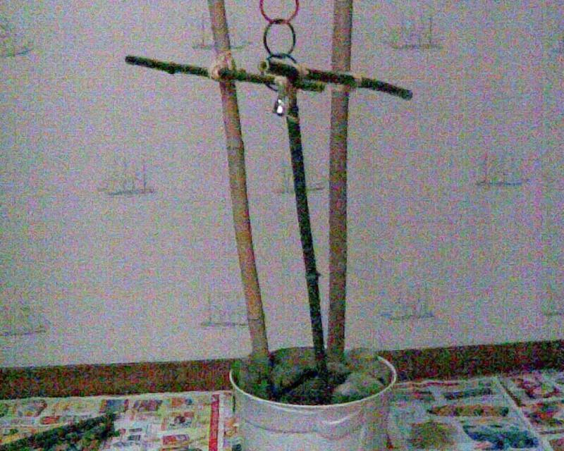 Un arbre à Perruches !!! Photo022