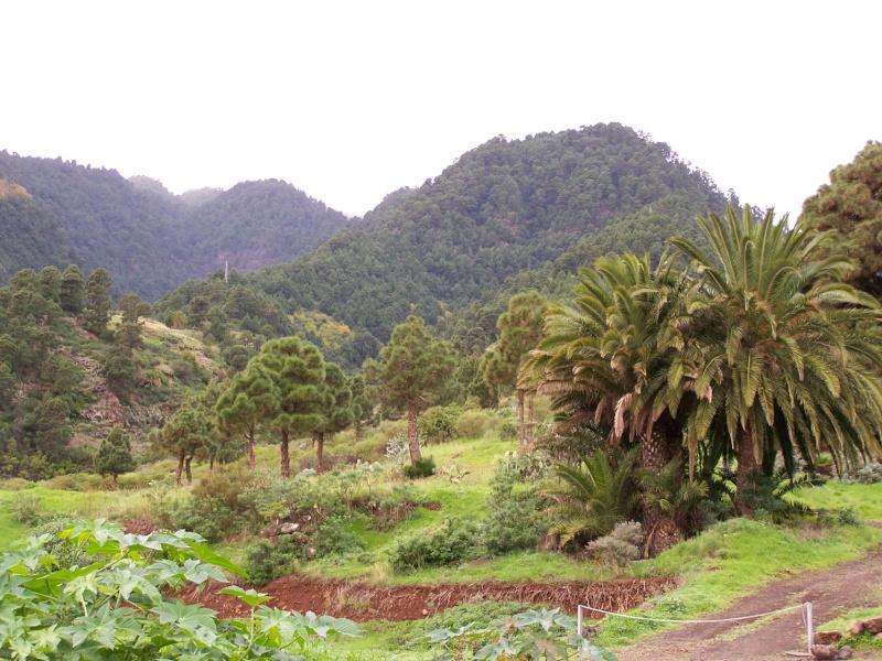 Ile de La Palma, archipel des Canaries La_pal10