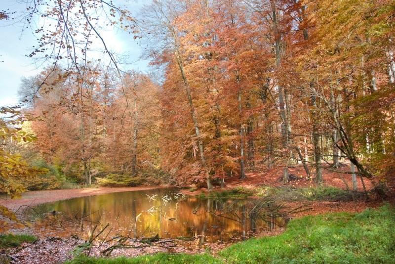 Forêt de Soignes - Bruxelles _mg_4710
