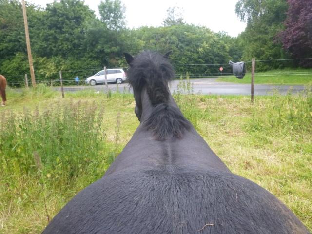 Trekker pour gros poney ?  P1010914