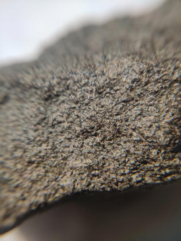 météorite achondrite nwa xx Img_2025