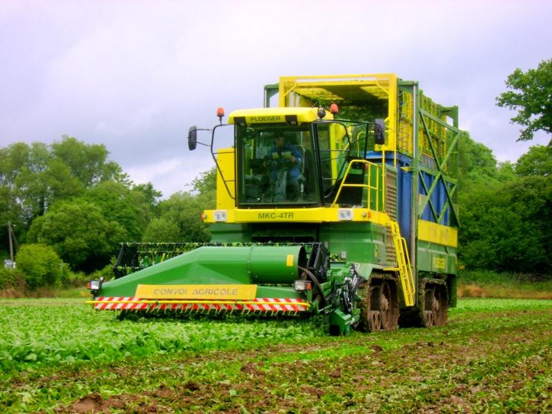 les légumes, du semis à la récolte Dsc03514