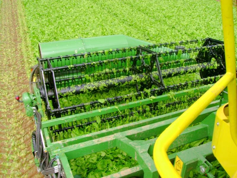 les légumes, du semis à la récolte Dsc03515