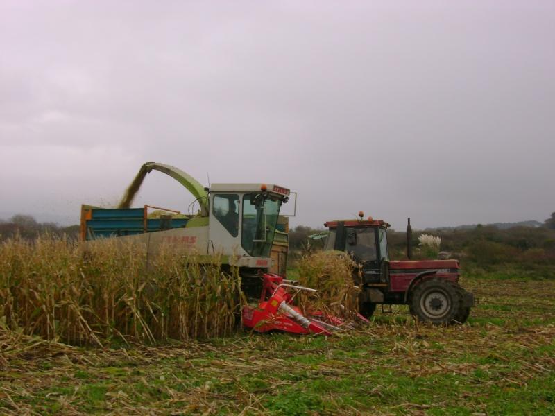 Ensilage de maïs 2008 - Page 6 Dsc04917