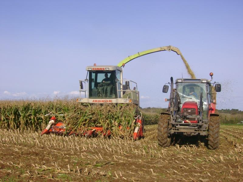 Ensilage de maïs 2008 - Page 6 Dsc05014