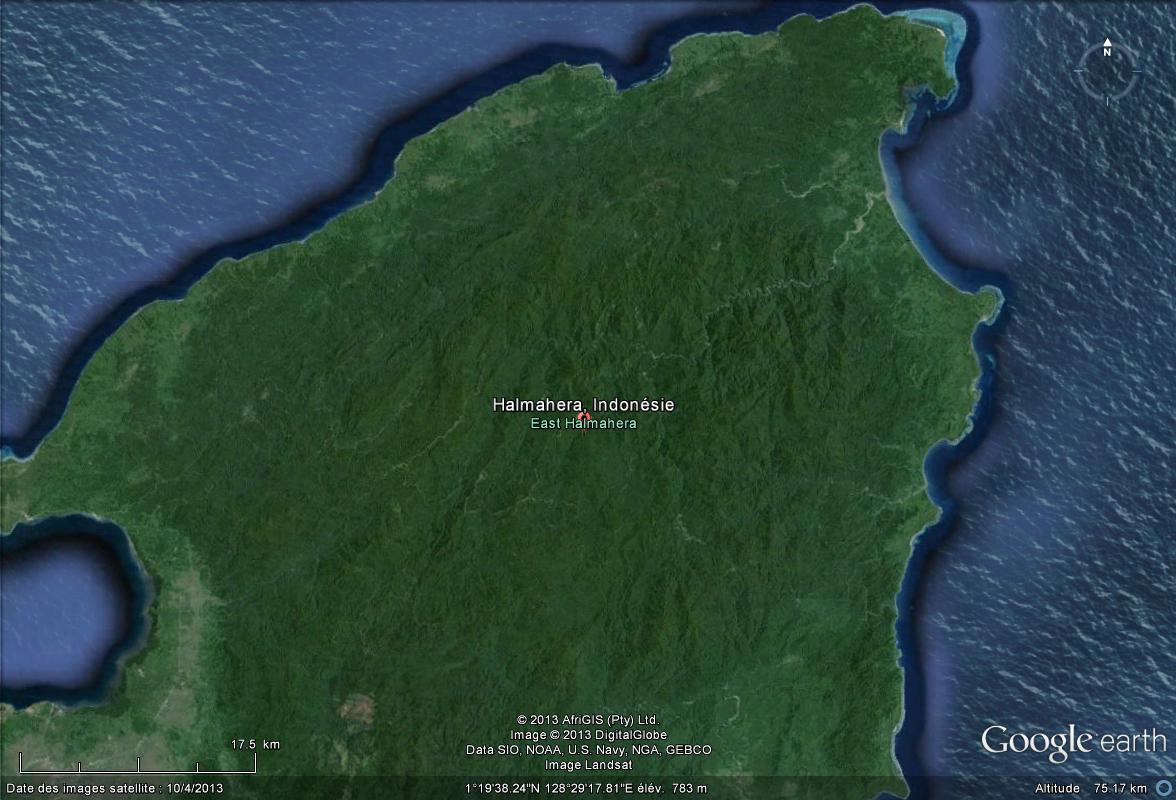 Un nouveau rat couvert d'épines découvert aux Moluques Halmah10