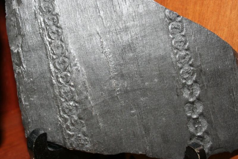 Grès (Sandstone) Schistes( Shale) types de conservation Img_1010