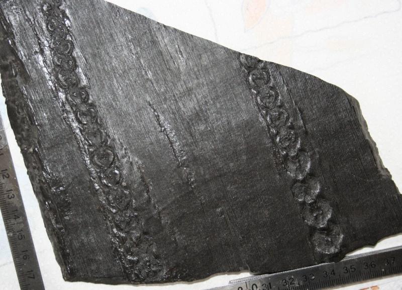 Grès (Sandstone) Schistes( Shale) types de conservation Img_7410