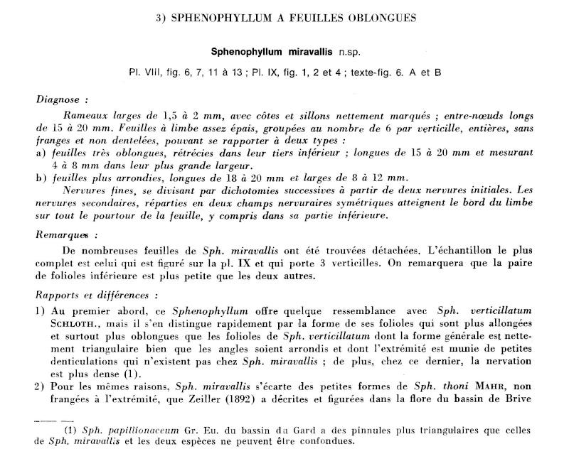 Calamites Schlotheim ,1820.  Annularia sternberg , 1822 .  P_46_l10