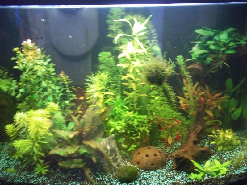 Nouveau Aquarium 130L et 60L spé crevettes - Page 2 100_0713