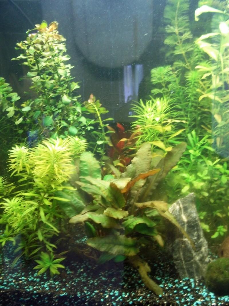 Nouveau Aquarium 130L et 60L spé crevettes - Page 2 100_0714