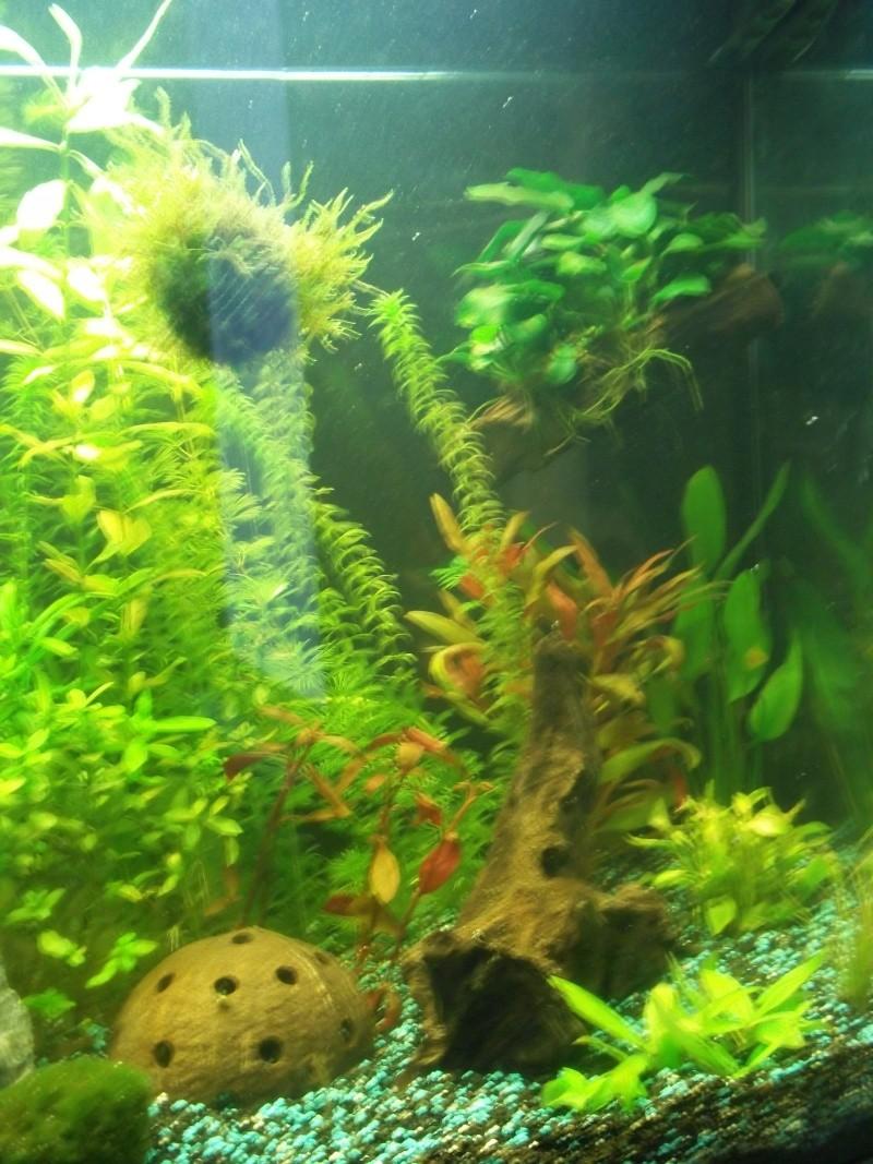Nouveau Aquarium 130L et 60L spé crevettes - Page 2 100_0715