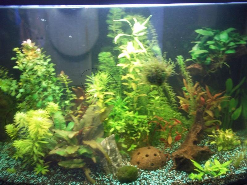 Nouveau Aquarium 130L et 60L spé crevettes - Page 2 100_0716