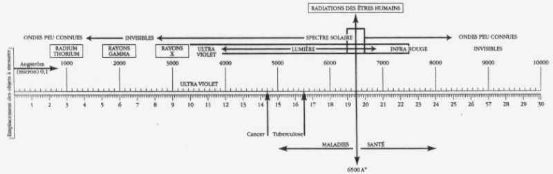 Echelle de bovis ou biomètre Biomet11